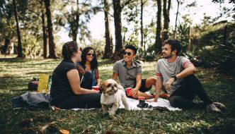 picnicture